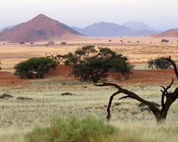 Unique desert landscape in Namibia
